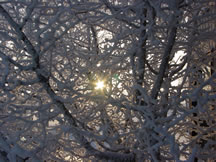 Snow, Frost Scenery, Peace River Regional District