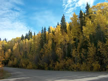 Forest Scenery, Peace River Regional District