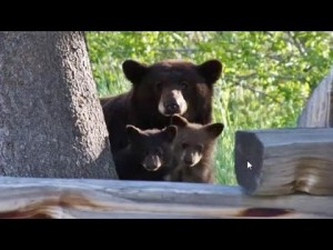 Mama and cubs 2